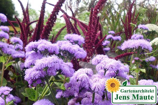 pflanzungen pflanzenvwerwendung bepflanzung von beetflaechen