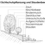 Konzeptskizze Detail Pflanzarbeiten Sichtschutz.