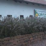 hochbeet mit gräserbepflanzung orientalisches lampenputzergras