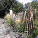 Naturgarten Wildblumen
