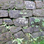 gartenmauer-maute-marburg
