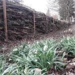 naturgarten-totholzhecke_benjeshecke
