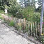 eine ansaat von kraeutern, naturgarten mit wildblumen