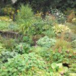 naturnahe_staudenpflanzungen