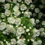 Pflanzen Blüten