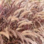 Pflanzungen-Gräser-Maute-Marburg