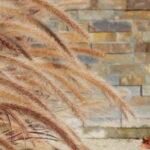 farbliche harmonie zwischen Grasblüten und Steinmauer
