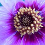 Makroaufnahme Blüten